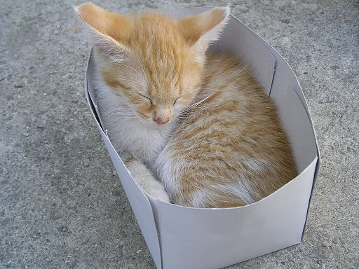 Cat_into_the_box (1)
